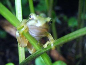 「  立夏 にて 腕まくり する 蛙 かな  」─  大 宮  エ リ  ー_c0328479_11015084.jpg