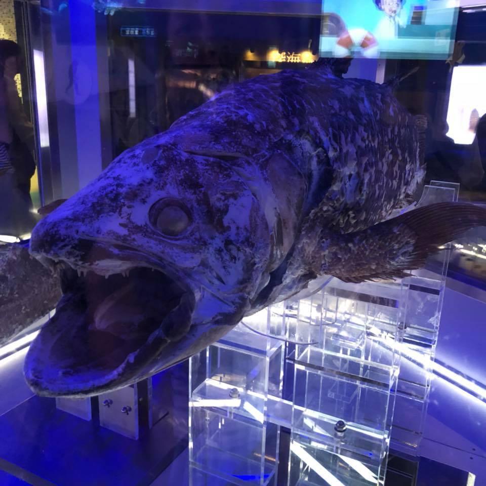 沼津港深海水族館~シーラカンスミュージアム_b0195783_16205287.jpg