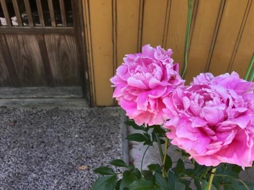 牡丹の花_d0141987_10491441.jpeg