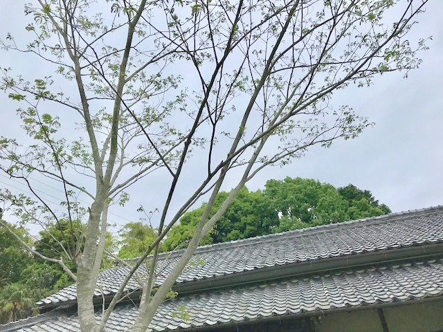 一時帰宅 ♡ 緑浴 (^-^)_c0165589_11431919.jpg