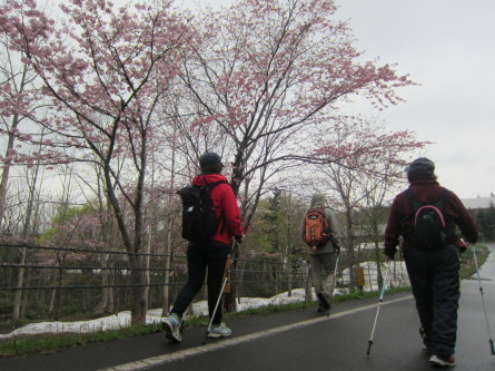 遅めの桜を眺めながら・・。道民の森ノルディックウォーキング2018。_d0198793_19244737.jpg