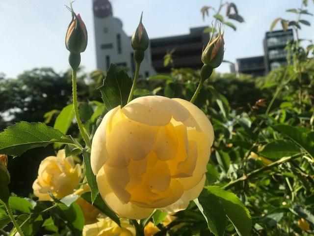 しっかり初夏ですね。_a0050302_03492213.jpg