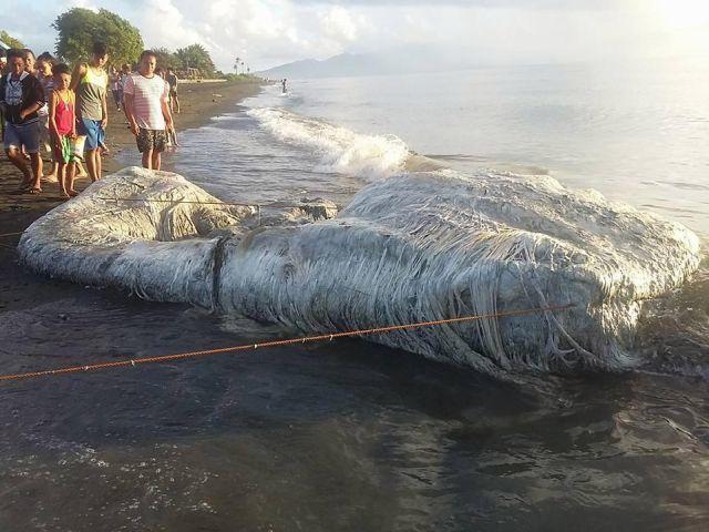 フィリピン海岸、謎の巨大生物、!伝説のUMAトランコか?_a0348309_8105154.jpg