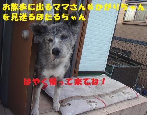 f0121712_16180495.jpg