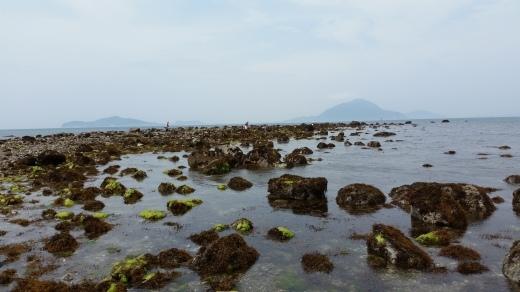 海の恵み_f0208315_20353645.jpg