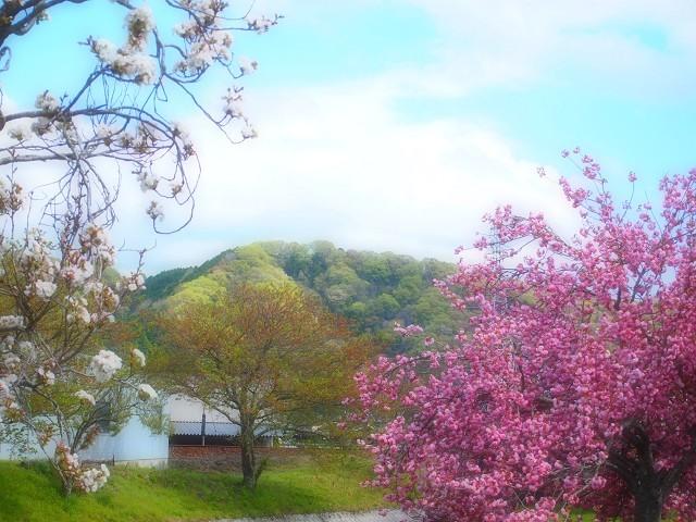 圧倒的桜。2018 春死なむ_d0295818_11180483.jpg