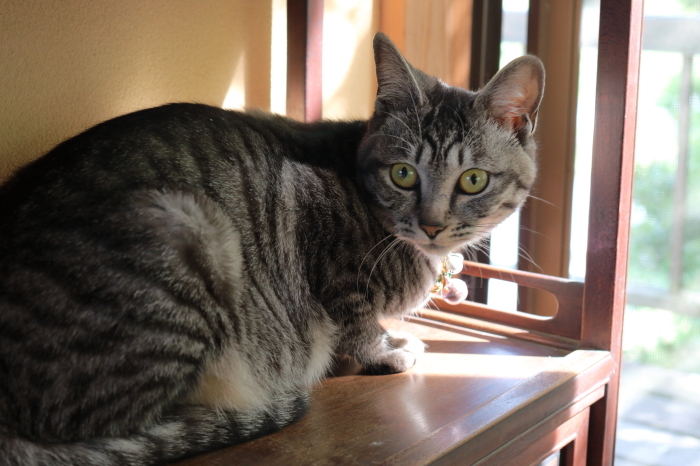 【松山庭園美術館 - 猫 - 】銚子旅行 - 3 -_f0348831_00322886.jpg