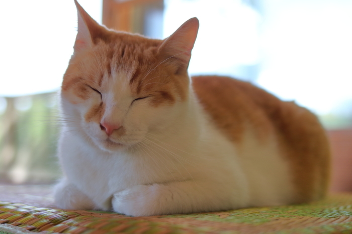 【松山庭園美術館 - 猫 - 】銚子旅行 - 3 -_f0348831_00340980.jpg