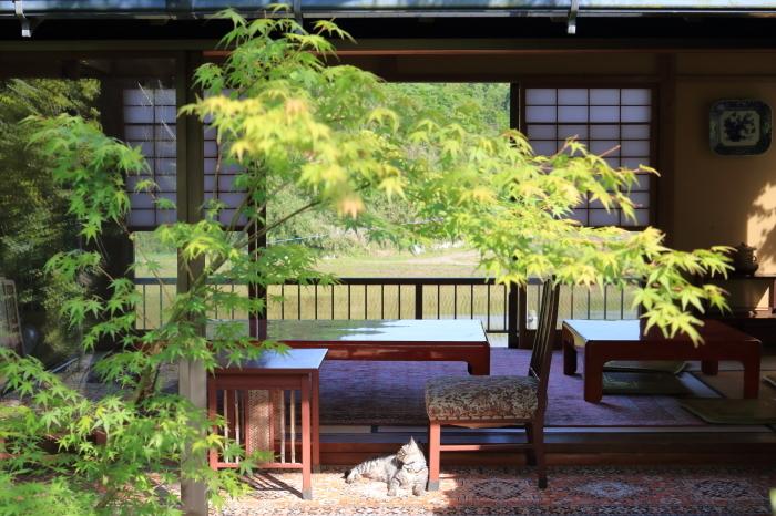 【松山庭園美術館 - 猫 - 】銚子旅行 - 3 -_f0348831_00345040.jpg