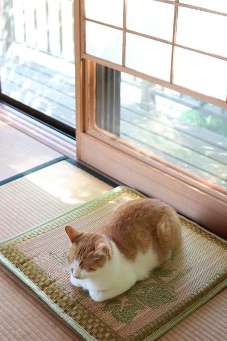 【松山庭園美術館 - 猫 - 】銚子旅行 - 3 -_f0348831_01094669.jpg
