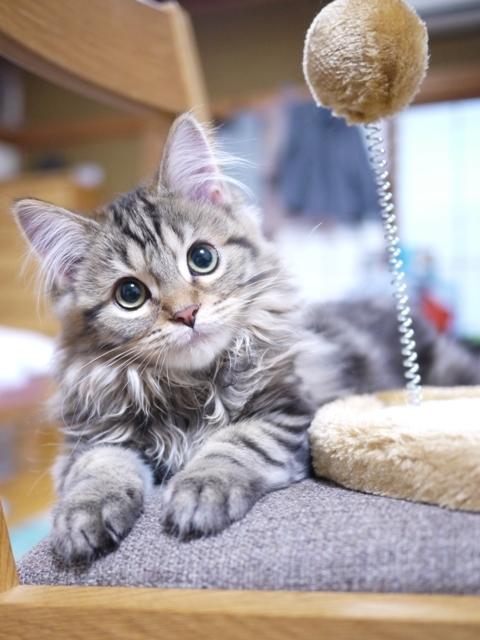猫のお留守番 アトムくん編。_a0143140_22201033.jpg