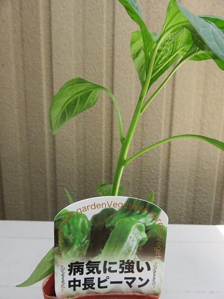 2018年5月22日 ナスとピーマンの苗を植えました (^o^)V_b0341140_1959914.jpg