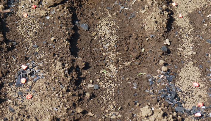 ピルカ(ジャガイモ)試掘りし、ビーフシチュウに5・15_c0014967_21253365.jpg