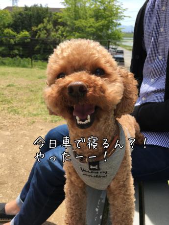 軽井沢旅行。1泊目車中泊。_b0370192_06002925.jpg