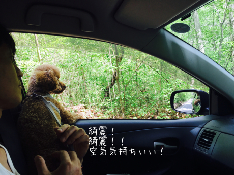 軽井沢旅行。2日目。旧軽井沢散歩。_b0370192_07095858.jpg