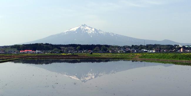 田んぼに映える逆さ津軽富士と、満開のリンゴの花など♪_a0136293_17251908.jpg