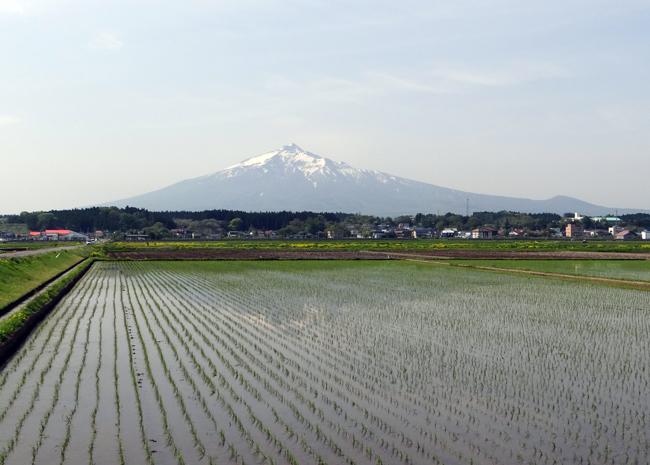 田んぼに映える逆さ津軽富士と、満開のリンゴの花など♪_a0136293_17265167.jpg