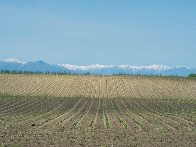 新緑の季節は・・残雪の日高山脈と畑のコントラストがきれい。_f0276498_10090804.jpg