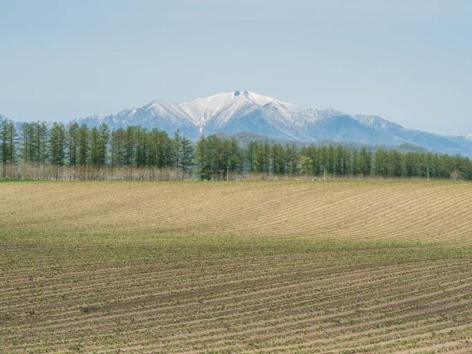 新緑の季節は・・残雪の日高山脈と畑のコントラストがきれい。_f0276498_10100420.jpg