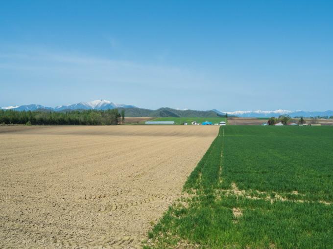 新緑の季節は・・残雪の日高山脈と畑のコントラストがきれい。_f0276498_10120392.jpg