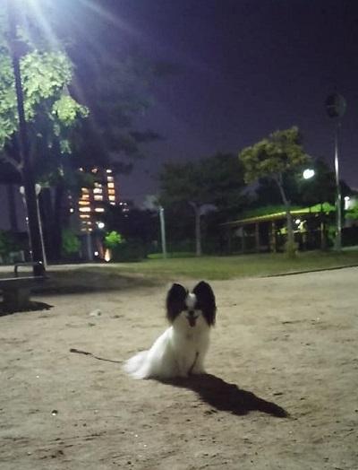最終闇練_e0190220_07400259.jpg