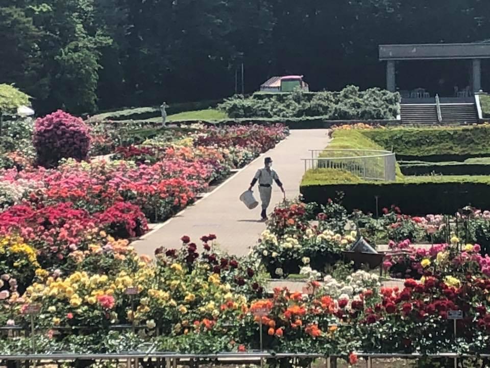 都立神代植物公園「春のバラフェスタ」_a0094959_00465249.jpg