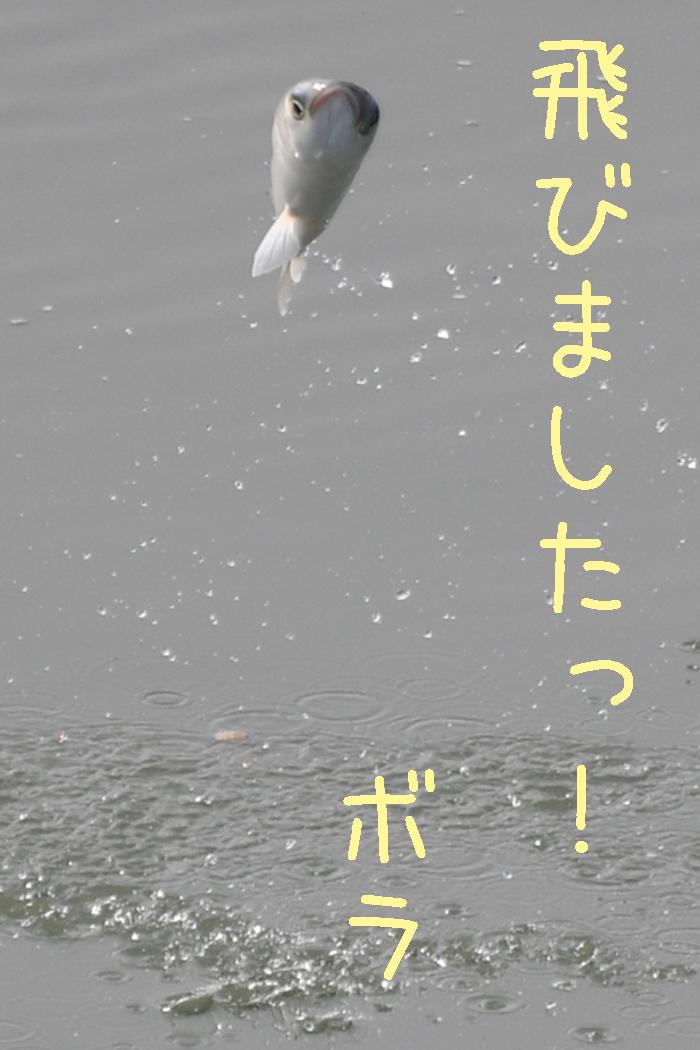 やっぱりジロちゃん祭りかー (≧∇≦)_c0049299_21443011.jpg