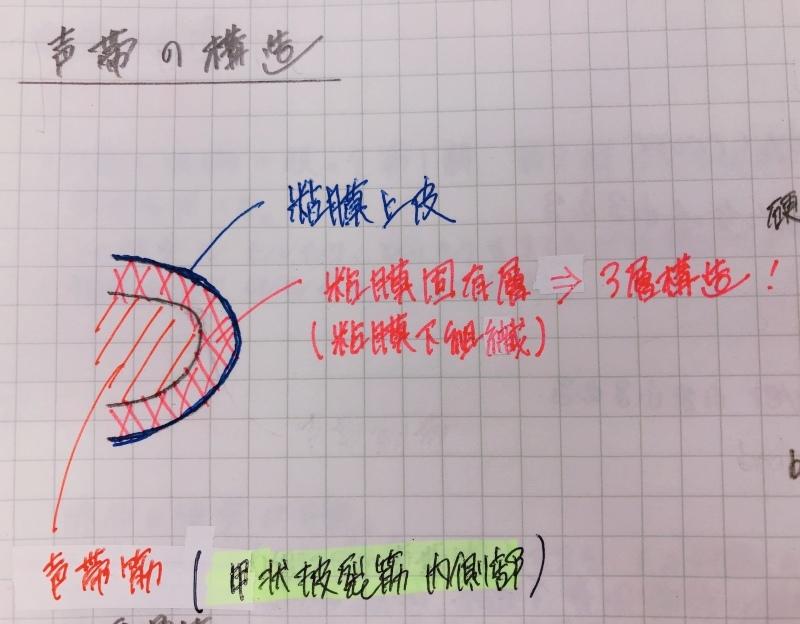 声帯の解剖_f0334910_12080966.jpeg