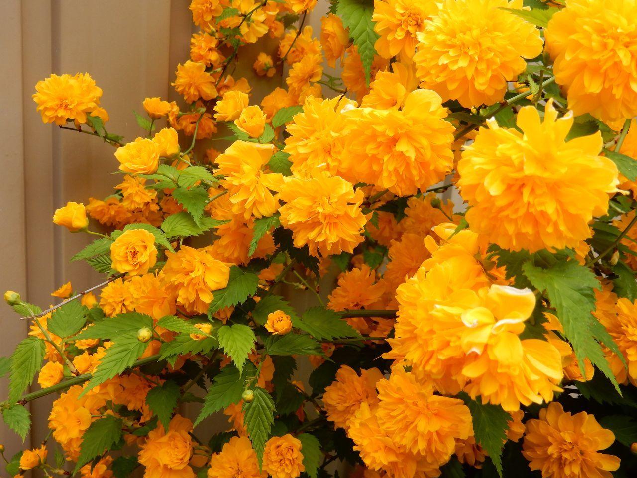 いくら寒くても5月には花が咲く_c0025115_23200746.jpg