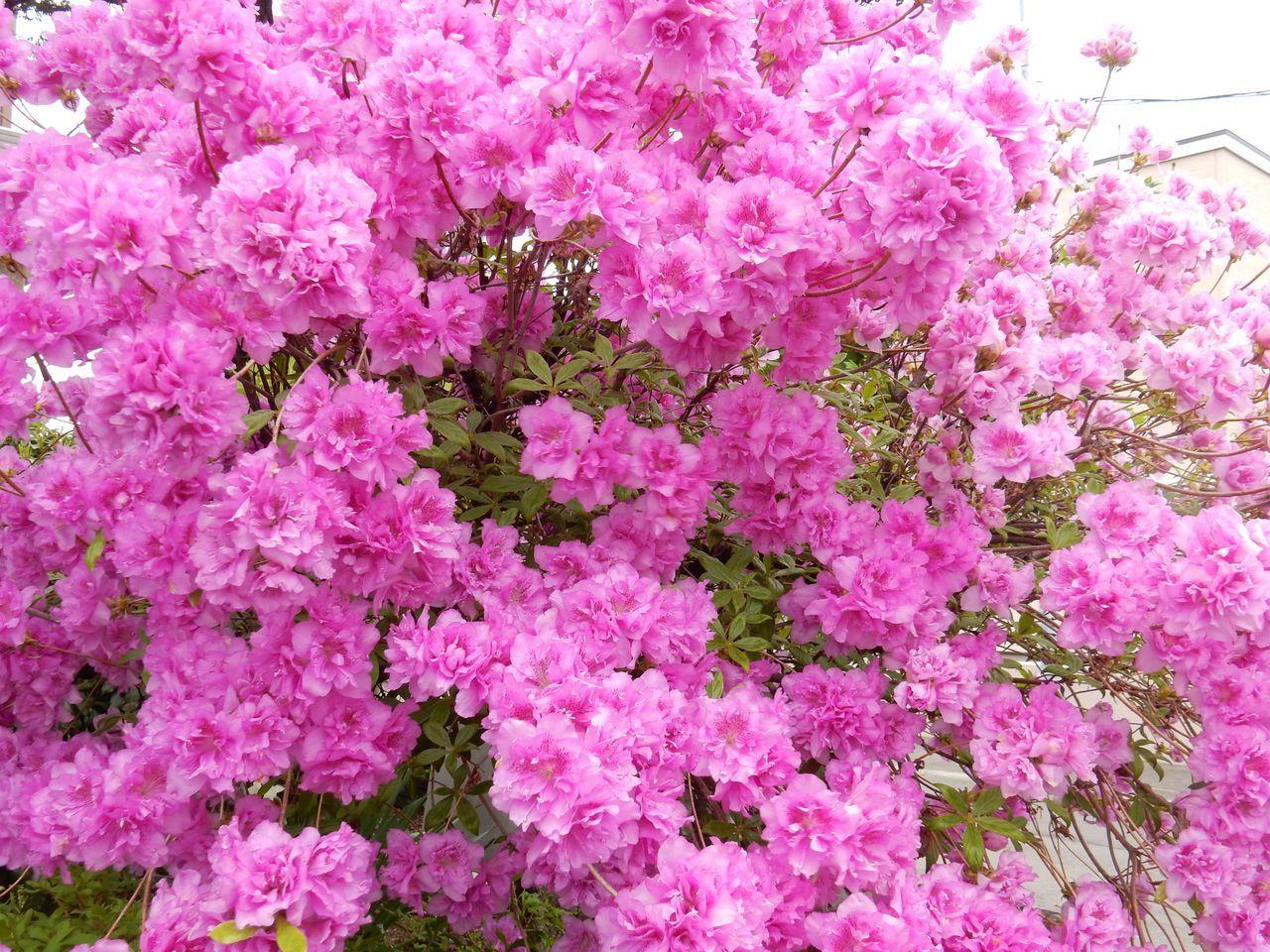 いくら寒くても5月には花が咲く_c0025115_23205558.jpg