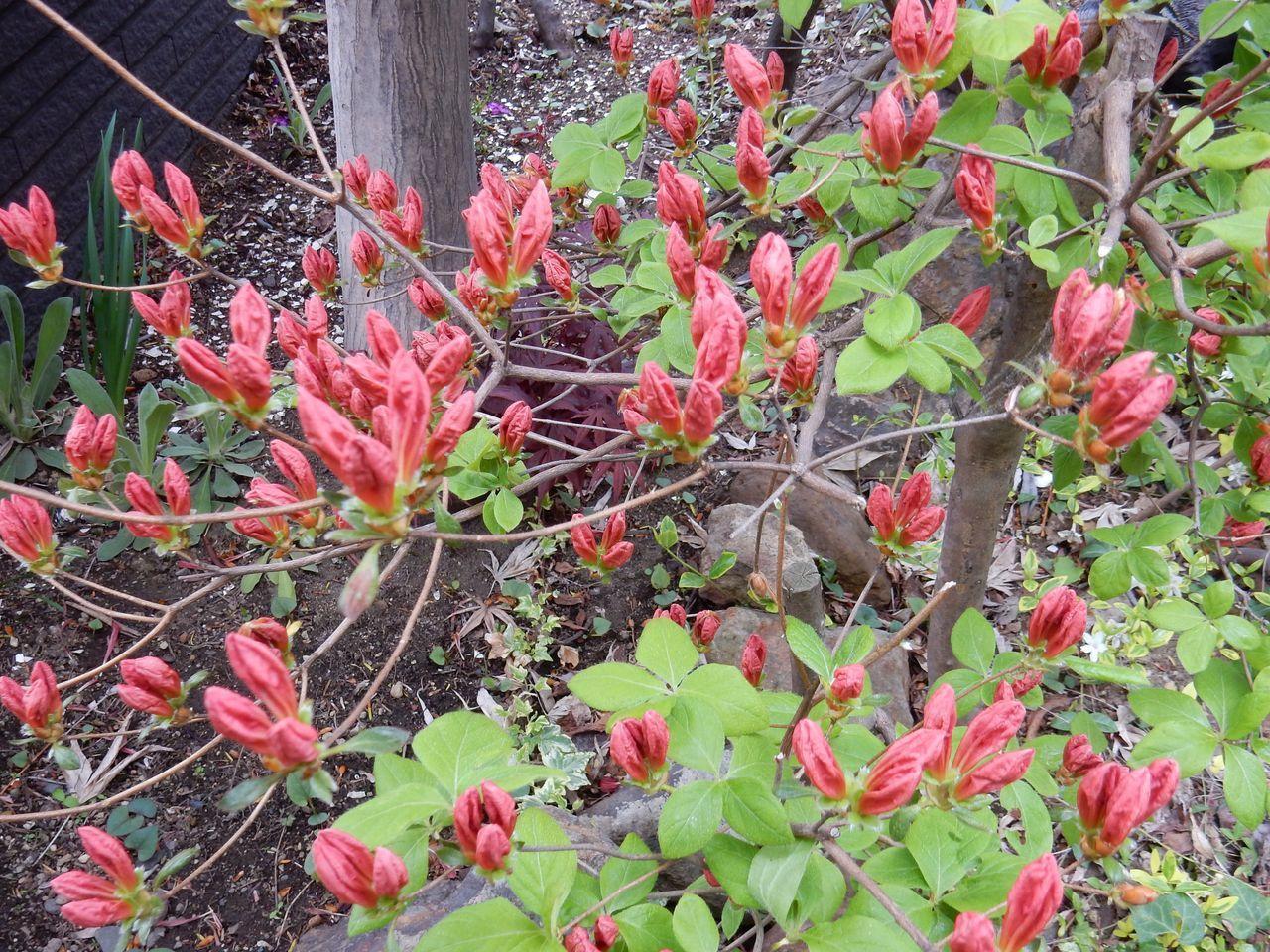いくら寒くても5月には花が咲く_c0025115_23213761.jpg