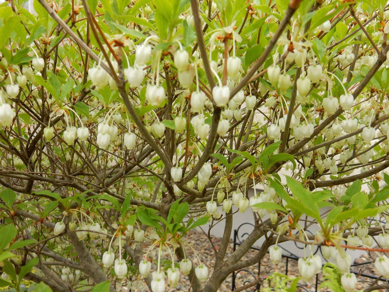 いくら寒くても5月には花が咲く_c0025115_23222673.jpg