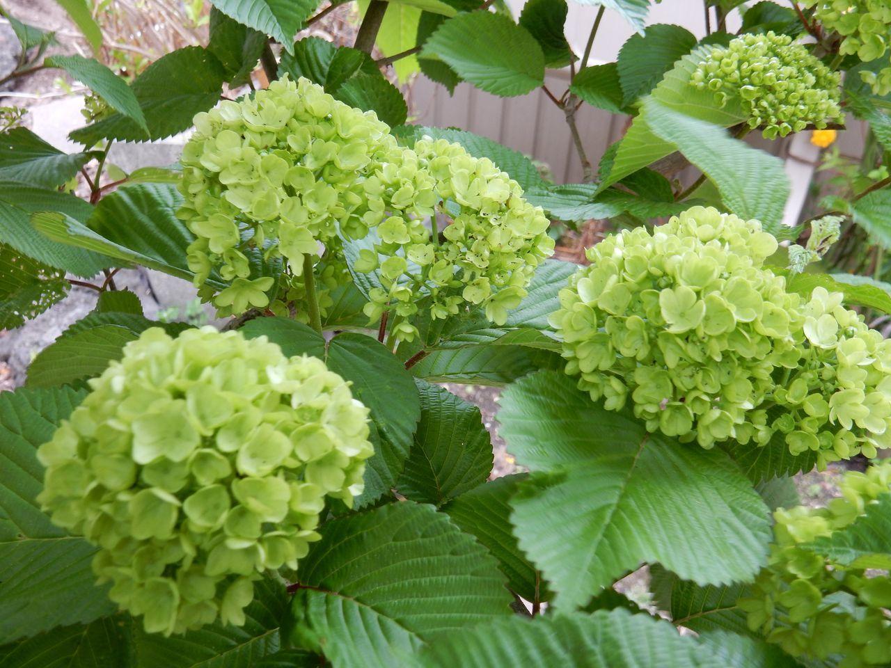 いくら寒くても5月には花が咲く_c0025115_23230680.jpg