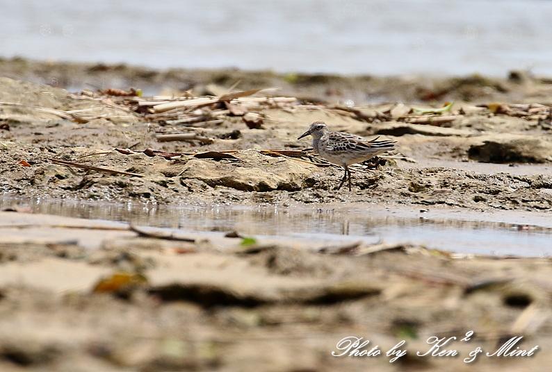 浜で出会った鳥さん達 -奄美大島編ー_e0218518_20444685.jpg