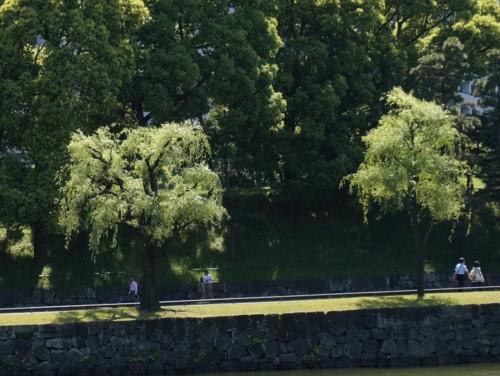 柳の若緑は松より淡い_f0055131_16504787.jpg