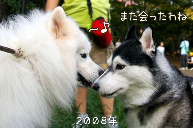 元気玉_c0062832_17100512.jpg