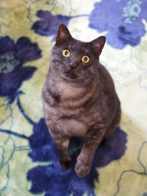 猫のお留守番 若くん編。_a0143140_21375968.jpg