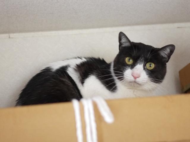 猫のお留守番 姫ちゃん編。_a0143140_21470633.jpg