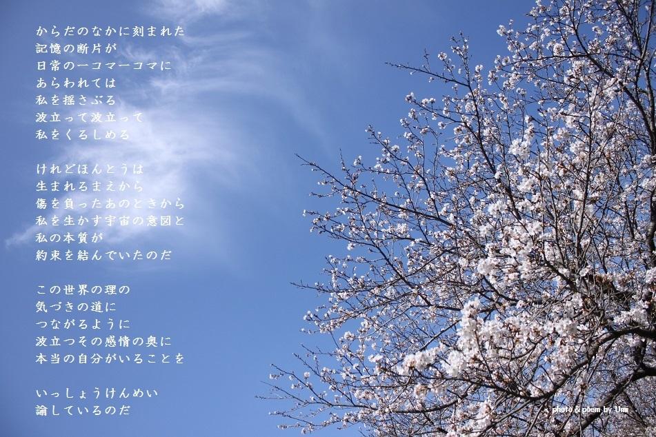 f0351844_16582705.jpg