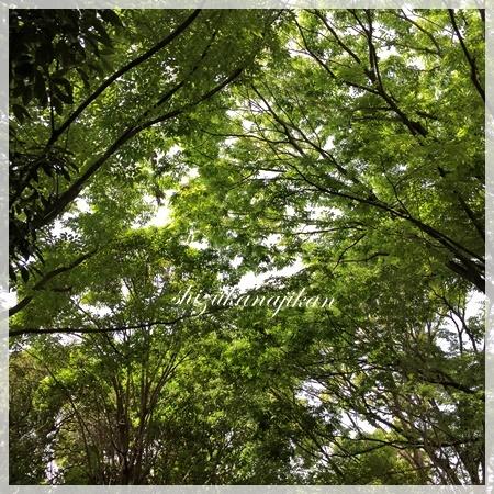 緑の中で・・・_a0341548_18593995.jpg