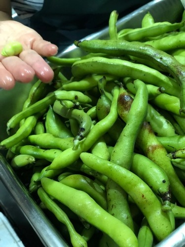 夏日 ズッキーニと蚕豆 スナップエンドウ 一気に収穫時期になっています_c0222448_12062167.jpg