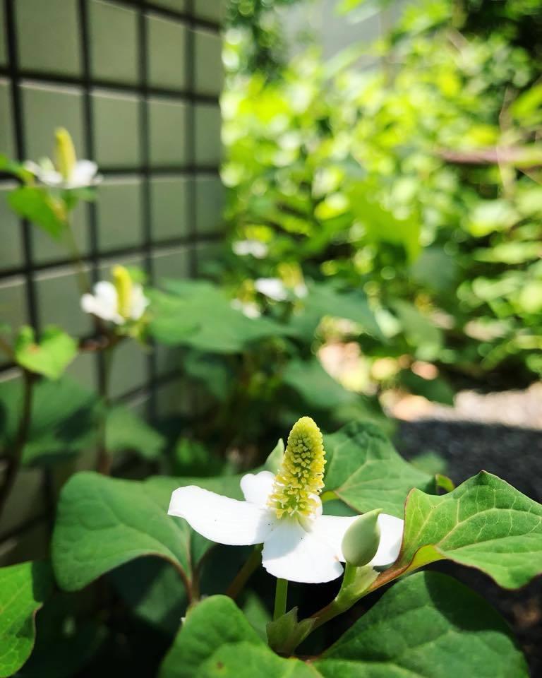 薔薇道をゆく_e0071652_16323363.jpg