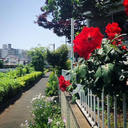 薔薇道をゆく_e0071652_16342012.jpg