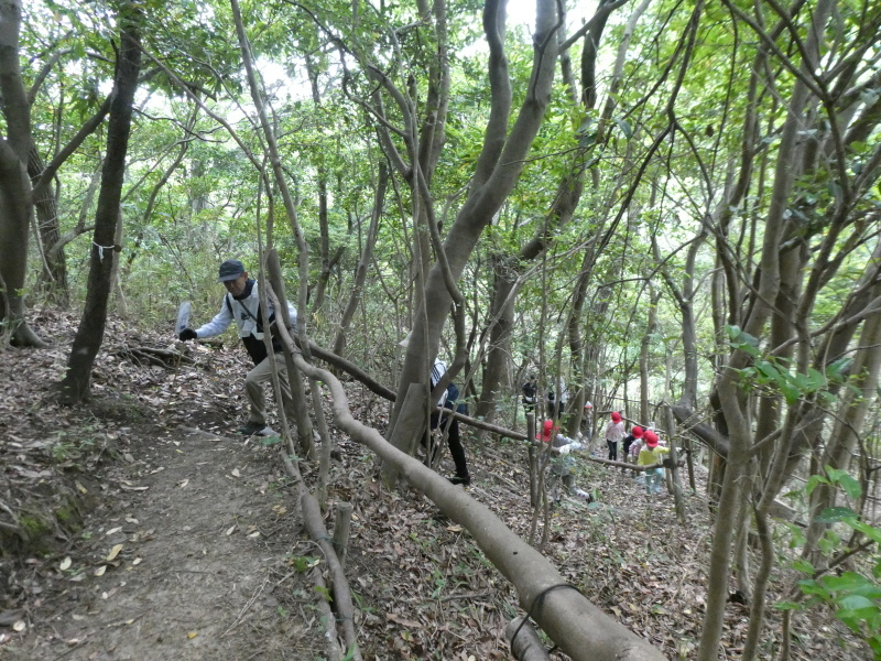 多奈川小学校1・2年生遠足 in うみべの森探検_c0108460_15564322.jpg