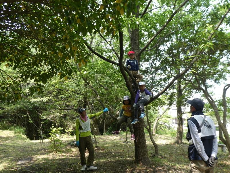 多奈川小学校1・2年生遠足 in うみべの森探検_c0108460_16292196.jpg