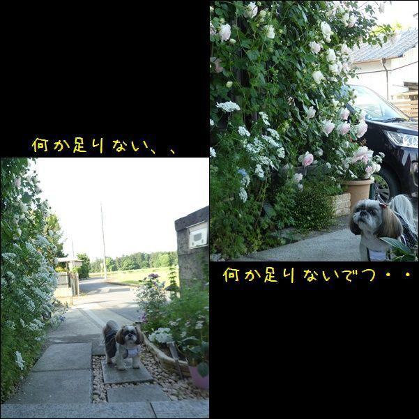 e0234881_21160509.jpg