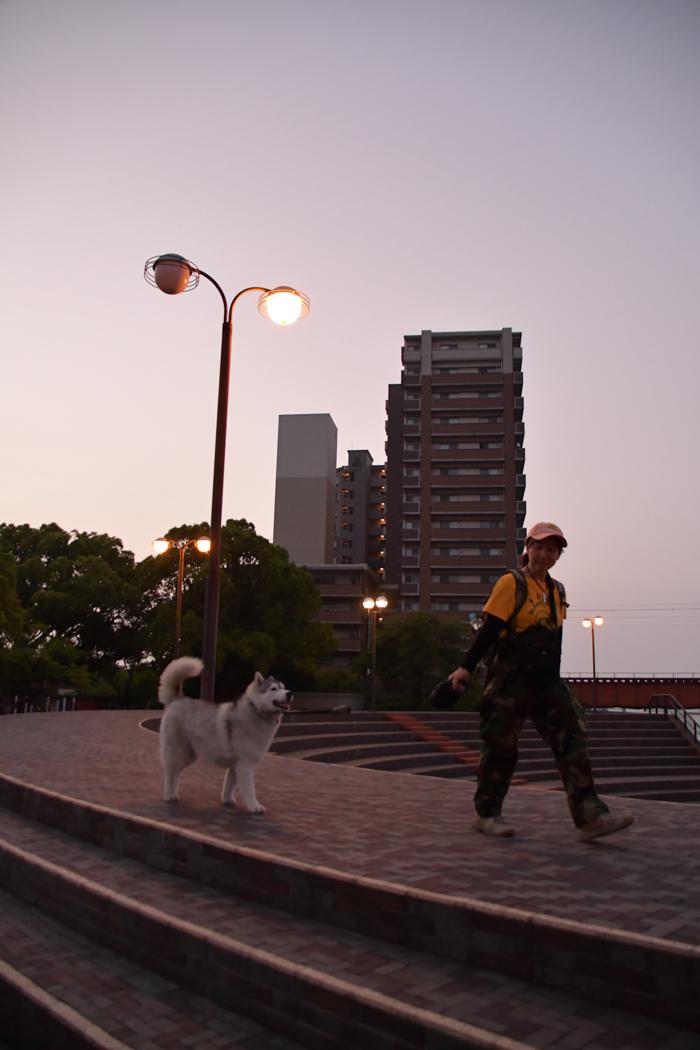 暑かった、がんばった、きょうのお散歩 (*^_^*)_c0049299_21033993.jpg