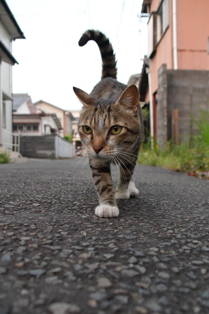 暑かった、がんばった、きょうのお散歩 (*^_^*)_c0049299_21064948.jpg