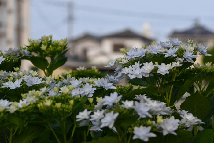 暑かった、がんばった、きょうのお散歩 (*^_^*)_c0049299_21441503.jpg