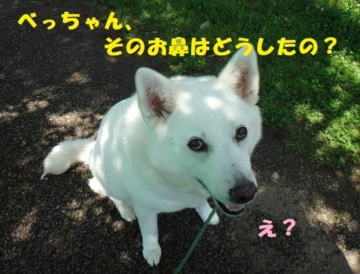 f0121712_00141459.jpg